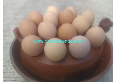 Huevo criollo